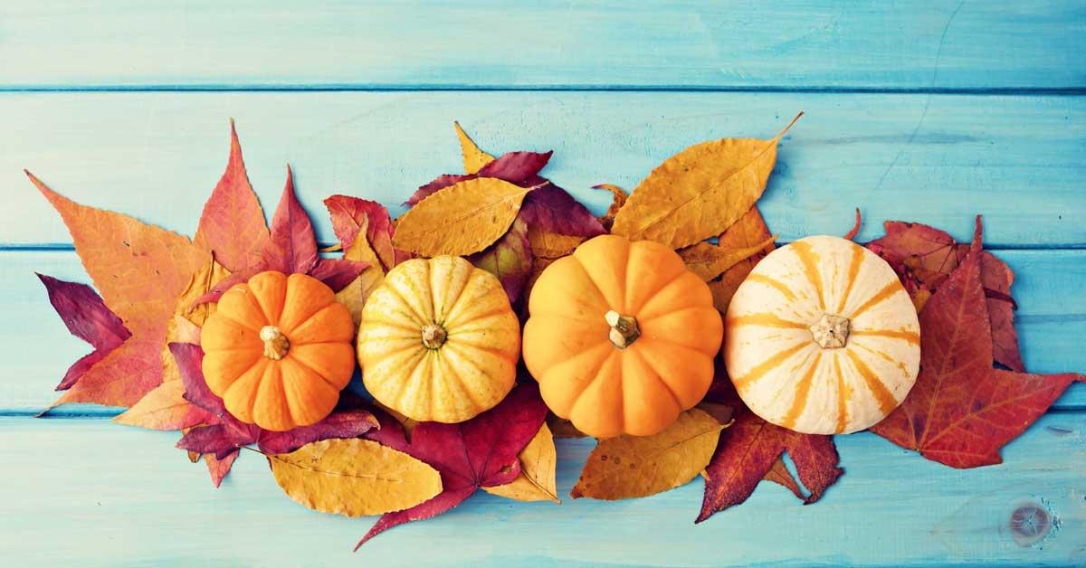 Autumn Window Decorations